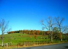 4 höst pennsylvania Royaltyfria Bilder