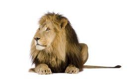 4 half år för leo lionpanthera Royaltyfri Foto