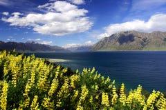 4 hawea湖淡紫色 免版税库存图片