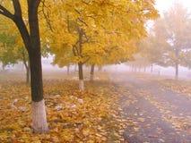 4 jesieni Obrazy Stock