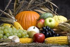 4 jesienią owoców Obrazy Stock