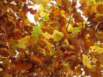4 jesiennych liści Zdjęcia Stock