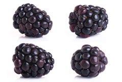 4 Juicy blackberry on the white  background. Blackberry  on a white background closed up Royalty Free Stock Photo