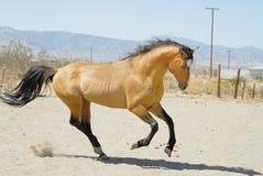 4 konia Obrazy Stock