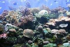 4 korali actinias Obrazy Royalty Free