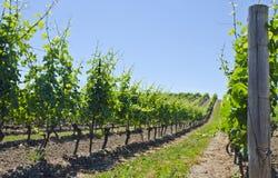 4 krajobrazowy winnica Obrazy Royalty Free