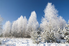 4 lasów zima Obraz Royalty Free