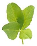 4 leaf clover Stock Photos