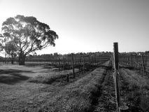 4 leconfield zdjęcie royalty free