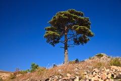 4 linii brzegowych drzewo Fotografia Royalty Free