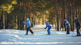 4 Man Snow Skiing in the Woods Stock Photography