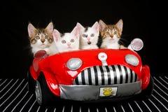 4 nette Kätzchen im roten weichen Spielzeugauto stockbilder