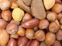 4 nuts skal Arkivfoton