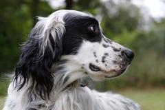 4 pies Zdjęcia Royalty Free