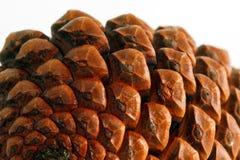 4 pinecone 免版税库存照片