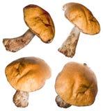4 punti di vista del fungo della foresta isolati su bianco Immagine Stock