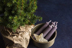 4 Purple Candle Stick on Brown Steel Container Beside Green Christmas Tree Royalty Free Stock Images
