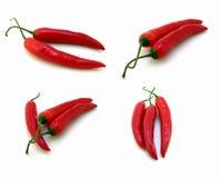 4 röda chilibildpeppar Fotografering för Bildbyråer