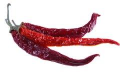 4 röda varma peppar för chili Royaltyfria Foton