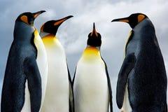 4 rey pingüinos Fotografía de archivo