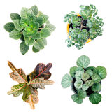 4 roślinnych obrazy royalty free