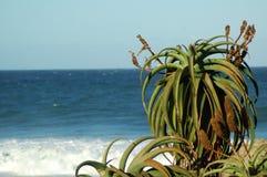 4 roślinnych aloesów obraz royalty free