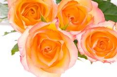 4 rose sopra bianco Fotografia Stock Libera da Diritti