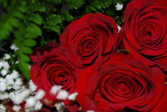 4 roses dans l'amour Photo stock