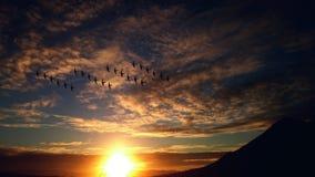 4 Rosw of Birds Flying Stock Photos