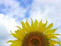 4 słonecznik Obrazy Royalty Free