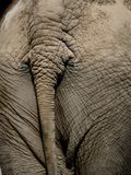 4 słonia Obraz Stock