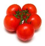 4 saftiga perfekta tomater Royaltyfri Bild