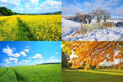 4 seasons collection Royalty Free Stock Photography