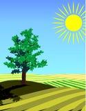 4 seasons: summer. Four seasons: summer a single tree standing in the fields stock illustration
