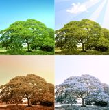 4 seasons on a tree Stock Photos