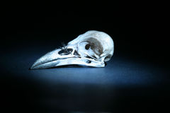 About 4 second time laps aka bulb exposure of a real crow skull lit up with a small blueish flashl. Ight in a completely black room stock images
