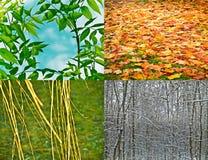 4 seizoenen stock foto