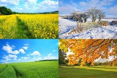 4 seizoeneninzameling Royalty-vrije Stock Fotografie