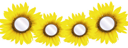 4 sunflower inserts Stock Photo