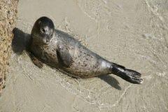 4 szczeniaka portów seal Zdjęcie Stock