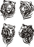 4 tiger heads Royalty Free Stock Photo