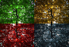 4 trees. Four colored seasons on a tree Royalty Free Stock Photos