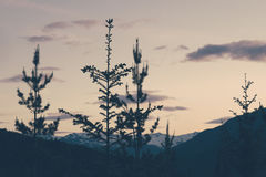 4 Trees on Mountains during Sunset Royalty Free Stock Photos