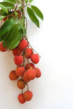 4 tropiska frukter Arkivbild