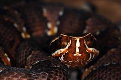 4 wąż Zdjęcie Royalty Free