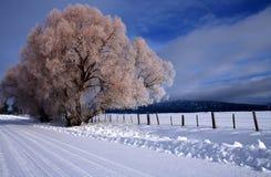 4 wiejskiej sceny zimowe Zdjęcie Royalty Free
