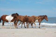 4 wild paarden Royalty-vrije Stock Afbeeldingen