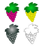 4 wine grapes Stock Images