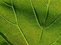 4 zielone liści, obraz stock