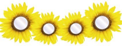 4 zonnebloemtussenvoegsels Stock Foto